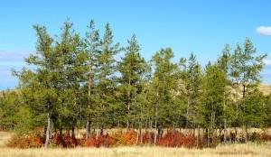 Herbst in Sibirien