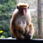 Affen im Paradies