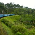 Zugfahrt durch Teeplantagen