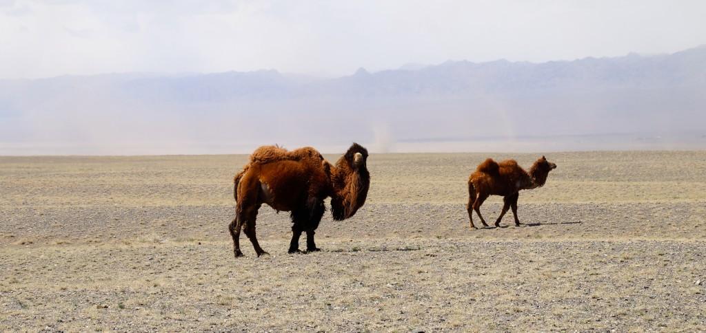 Wüste Gobi mit seinen Bewohnern und Sandsturm geschwängerter Luft