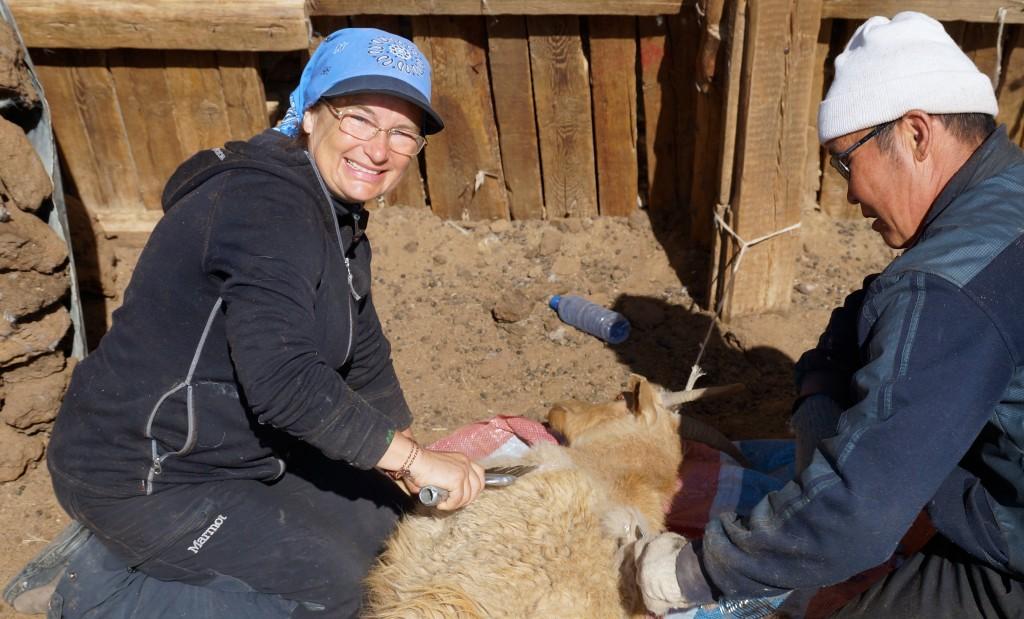 Hurle und ich beim Kämmen der Ziege