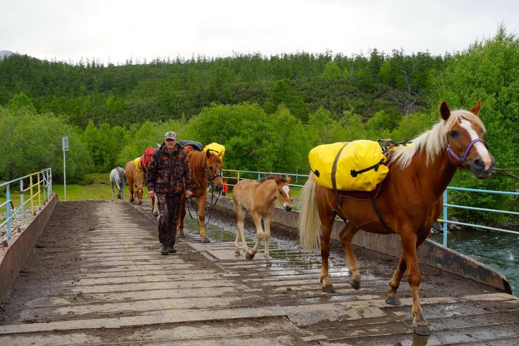 Gepäcktransport mit Pferden
